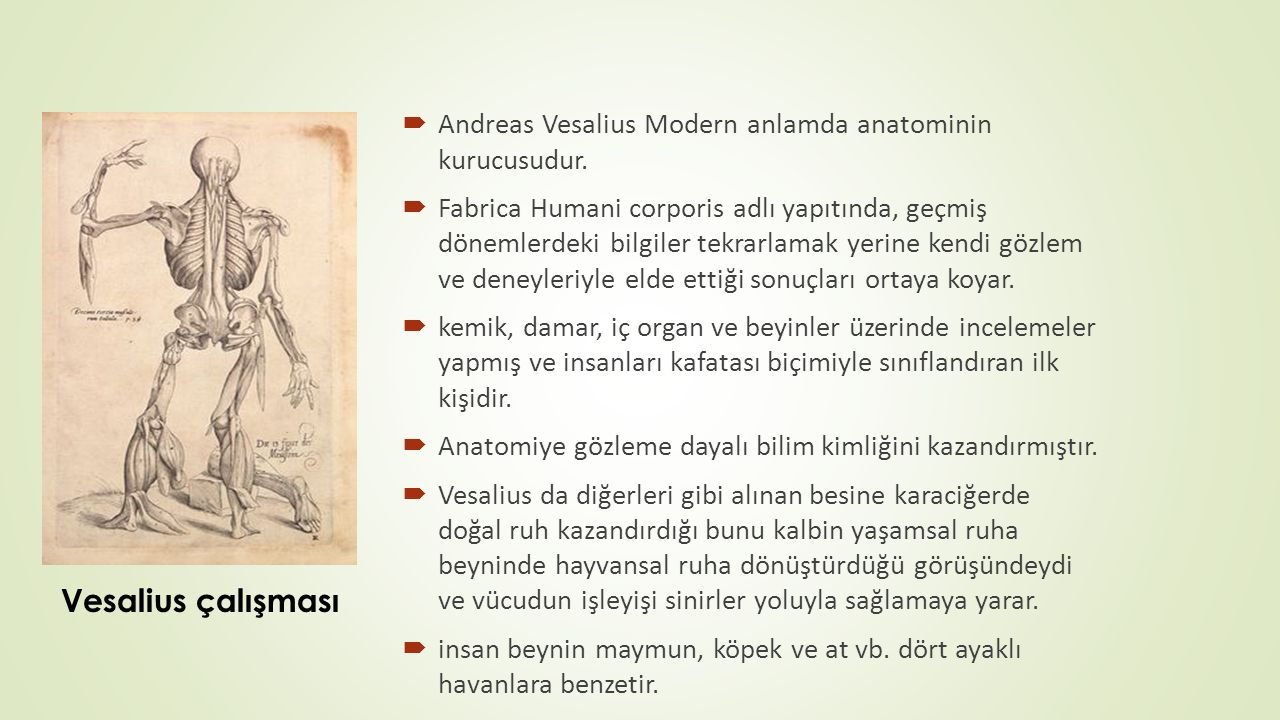  Andreas Vesalius Modern anlamda anatominin kurucusudur.