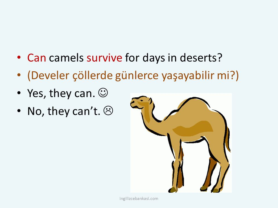 Can camels survive for days in deserts? (Develer çöllerde günlerce yaşayabilir mi?) Yes, they can. No, they can't.  ingilizcebankasi.com