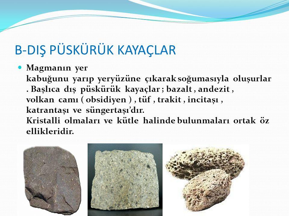 2- Tortul Taşlar : a-Organik Tortul Kayaçlar Bitki ya da hayvan kalıntılarının belli ortamlarda birikmesi ve zamanla taşlaşması sonucu oluşur.