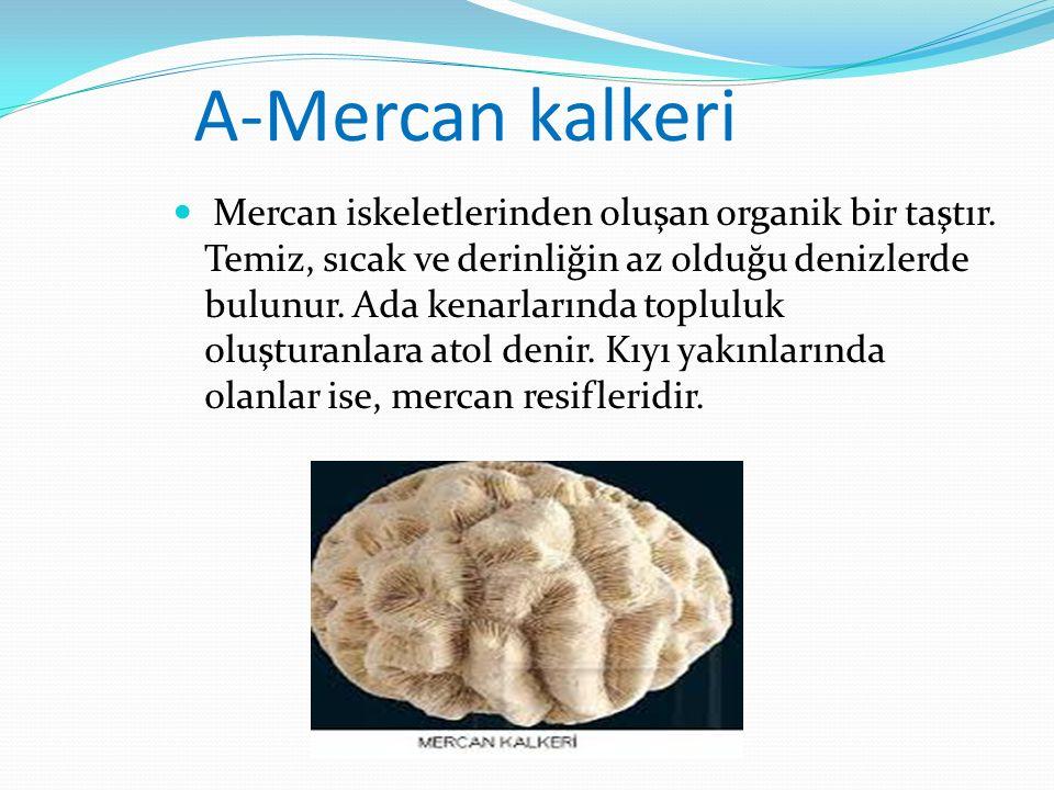 A-Mercan kalkeri Mercan iskeletlerinden oluşan organik bir taştır. Temiz, sıcak ve derinliğin az olduğu denizlerde bulunur. Ada kenarlarında topluluk