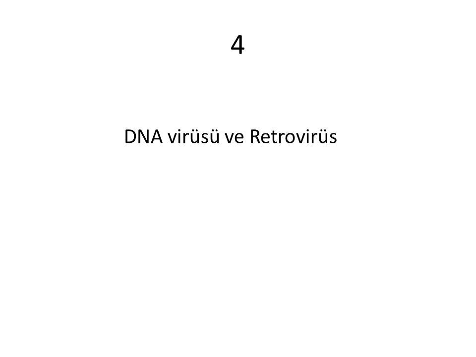 4 DNA virüsü ve Retrovirüs