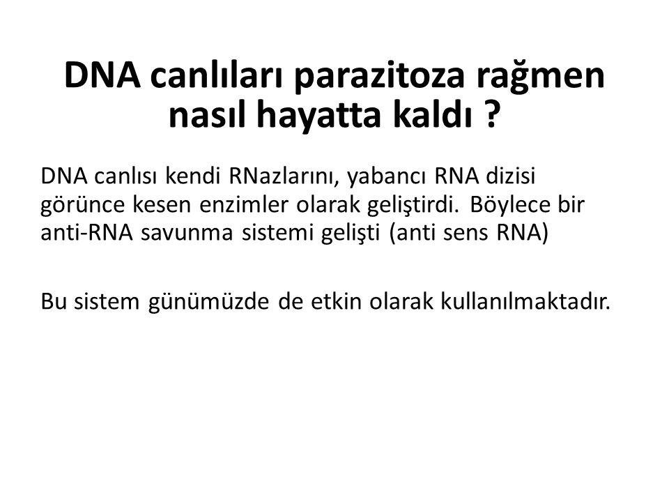 DNA canlıları parazitoza rağmen nasıl hayatta kaldı ? DNA canlısı kendi RNazlarını, yabancı RNA dizisi görünce kesen enzimler olarak geliştirdi. Böyle