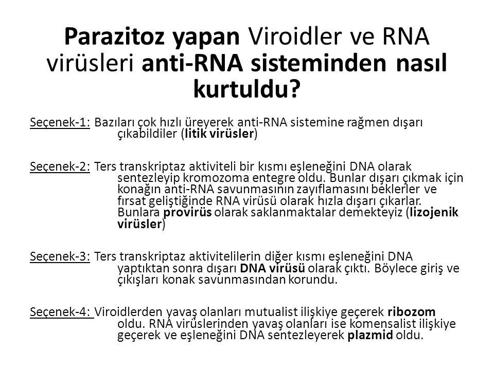 Parazitoz yapan Viroidler ve RNA virüsleri anti-RNA sisteminden nasıl kurtuldu? Seçenek-1: Bazıları çok hızlı üreyerek anti-RNA sistemine rağmen dışar