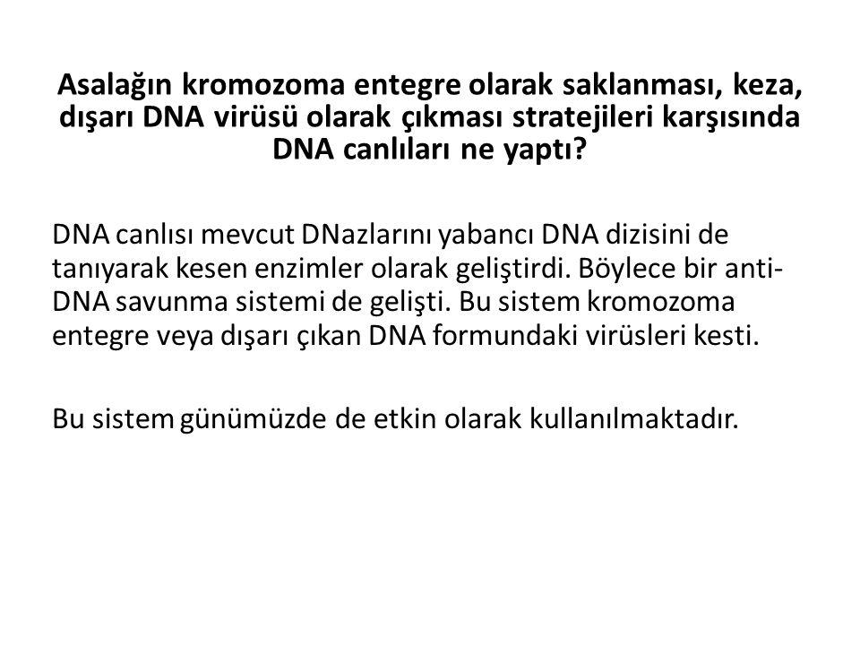 Asalağın kromozoma entegre olarak saklanması, keza, dışarı DNA virüsü olarak çıkması stratejileri karşısında DNA canlıları ne yaptı? DNA canlısı mevcu