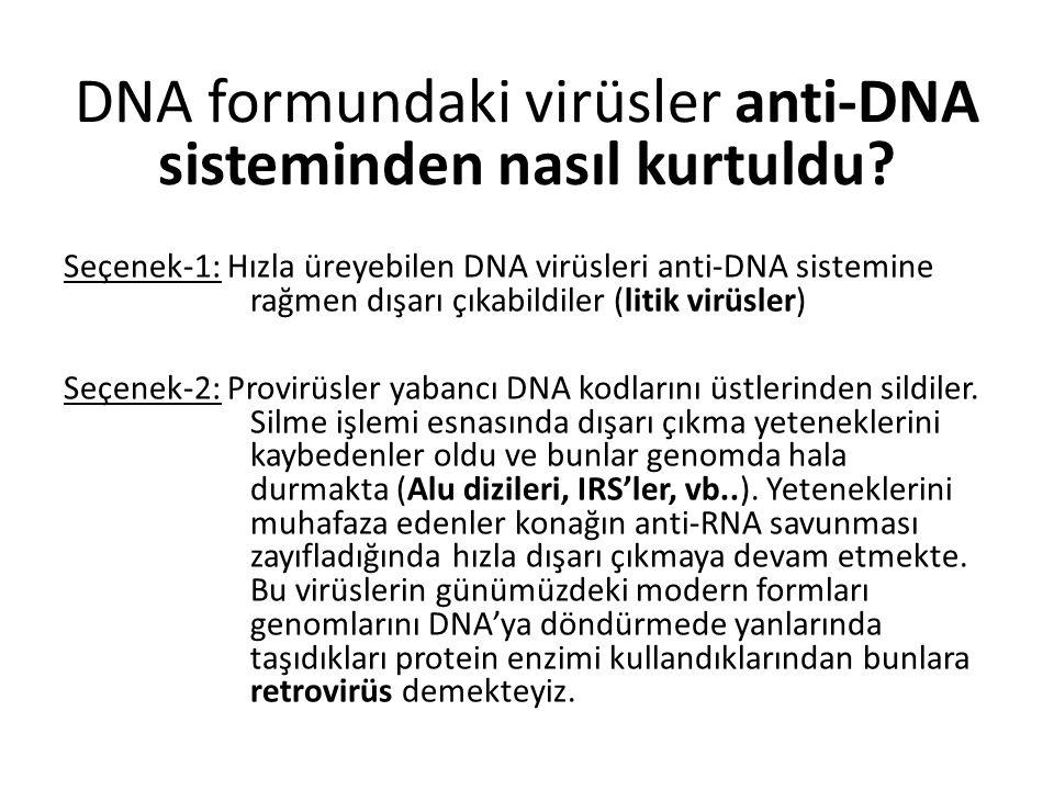 Seçenek-1: Hızla üreyebilen DNA virüsleri anti-DNA sistemine rağmen dışarı çıkabildiler (litik virüsler) Seçenek-2: Provirüsler yabancı DNA kodlarını üstlerinden sildiler.