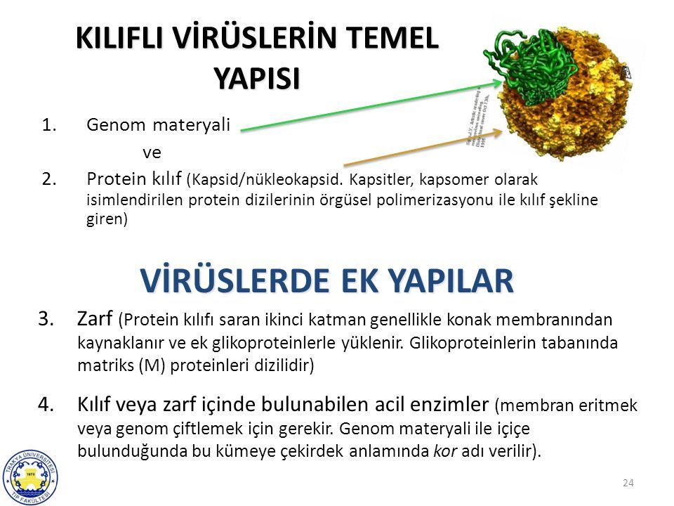 24 KILIFLI VİRÜSLERİN TEMEL YAPISI 1.Genom materyali ve 2.Protein kılıf (Kapsid/nükleokapsid. Kapsitler, kapsomer olarak isimlendirilen protein dizile