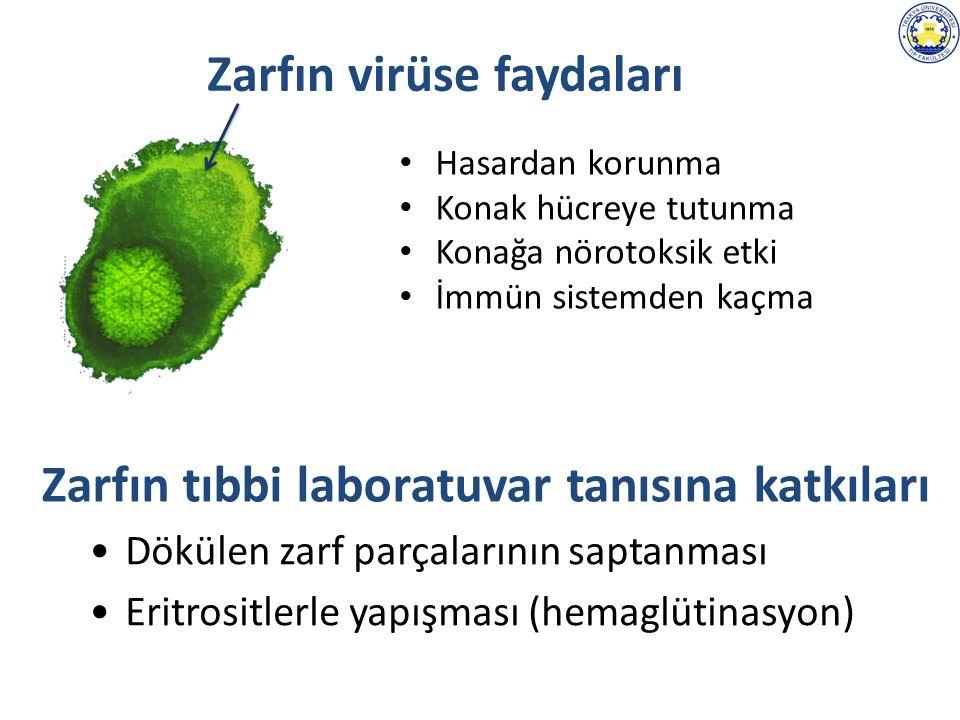 Hasardan korunma Konak hücreye tutunma Konağa nörotoksik etki İmmün sistemden kaçma Zarfın tıbbi laboratuvar tanısına katkıları Dökülen zarf parçalarının saptanması Eritrositlerle yapışması (hemaglütinasyon) Zarfın virüse faydaları