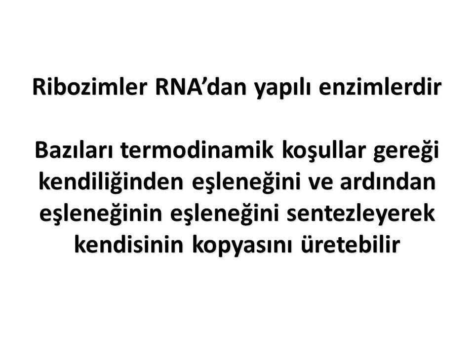 Ribozimler RNA'dan yapılı enzimlerdir Bazıları termodinamik koşullar gereği kendiliğinden eşleneğini ve ardından eşleneğinin eşleneğini sentezleyerek kendisinin kopyasını üretebilir