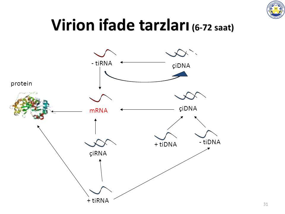 31 Virion ifade tarzları (6-72 saat) protein mRNA - tiRNA + tiRNA çiRNA çiDNA + tiDNA - tiDNA çiDNA
