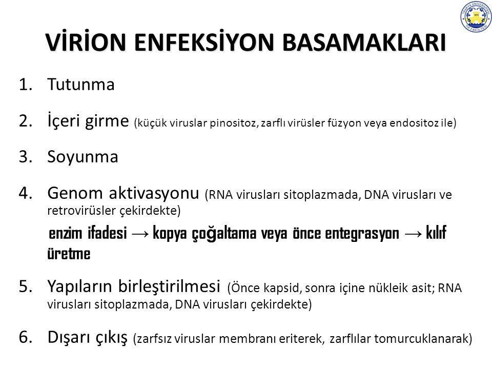 VİRİON ENFEKSİYON BASAMAKLARI 1.Tutunma 2.İçeri girme (küçük viruslar pinositoz, zarflı virüsler füzyon veya endositoz ile) 3.Soyunma 4.Genom aktivasyonu (RNA virusları sitoplazmada, DNA virusları ve retrovirüsler çekirdekte) enzim ifadesi → kopya ço ğ altama veya önce entegrasyon → kılıf üretme 5.Yapıların birleştirilmesi (Önce kapsid, sonra içine nükleik asit; RNA virusları sitoplazmada, DNA virusları çekirdekte) 6.Dışarı çıkış (zarfsız viruslar membranı eriterek, zarflılar tomurcuklanarak)