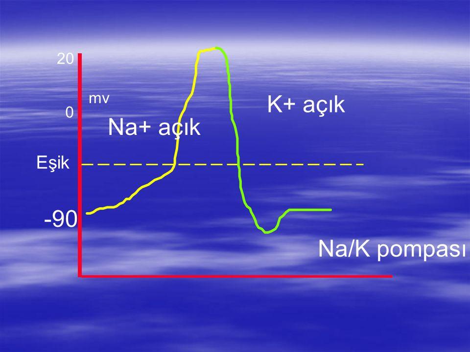 mv 0 -90 Eşik 20 Na+ açık K+ açık Na/K pompası