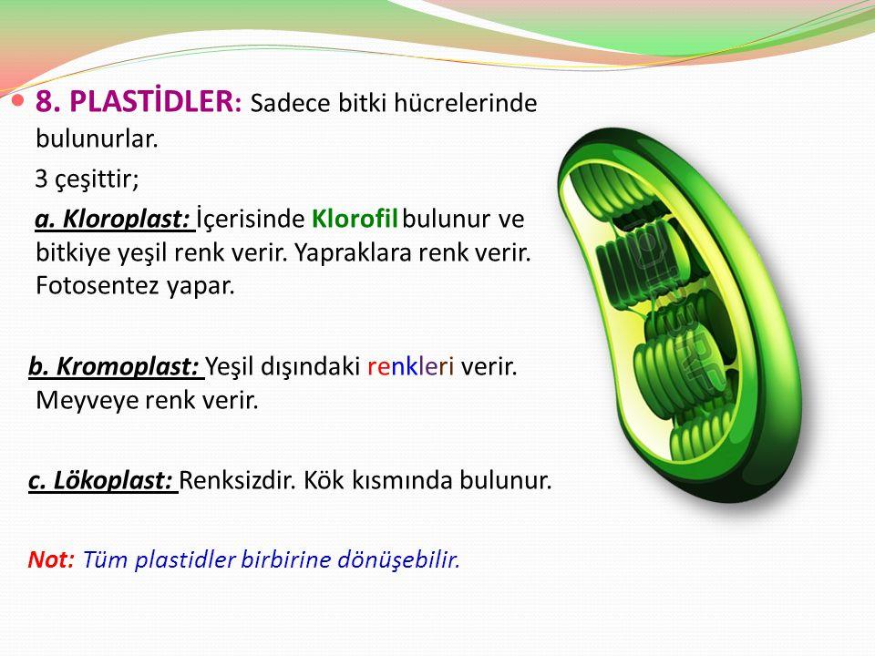8. PLASTİDLER : Sadece bitki hücrelerinde bulunurlar. 3 çeşittir; a. Kloroplast: İçerisinde Klorofil bulunur ve bitkiye yeşil renk verir. Yapraklara r
