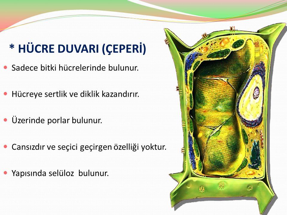 * HÜCRE DUVARI (ÇEPERİ) Sadece bitki hücrelerinde bulunur. Hücreye sertlik ve diklik kazandırır. Üzerinde porlar bulunur. Cansızdır ve seçici geçirgen