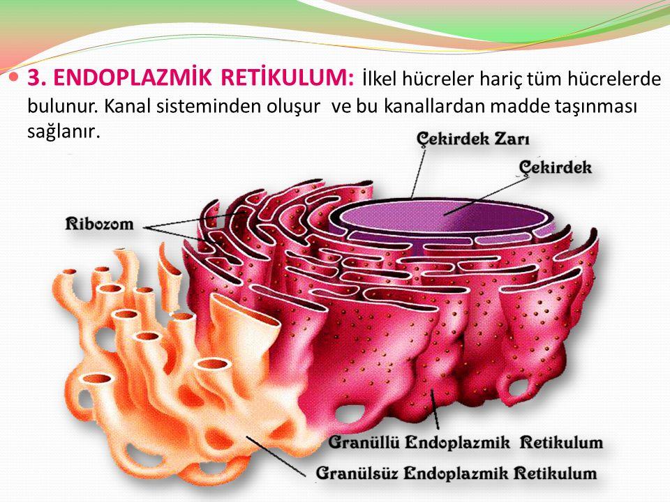 3. ENDOPLAZMİK RETİKULUM: İlkel hücreler hariç tüm hücrelerde bulunur. Kanal sisteminden oluşur ve bu kanallardan madde taşınması sağlanır.