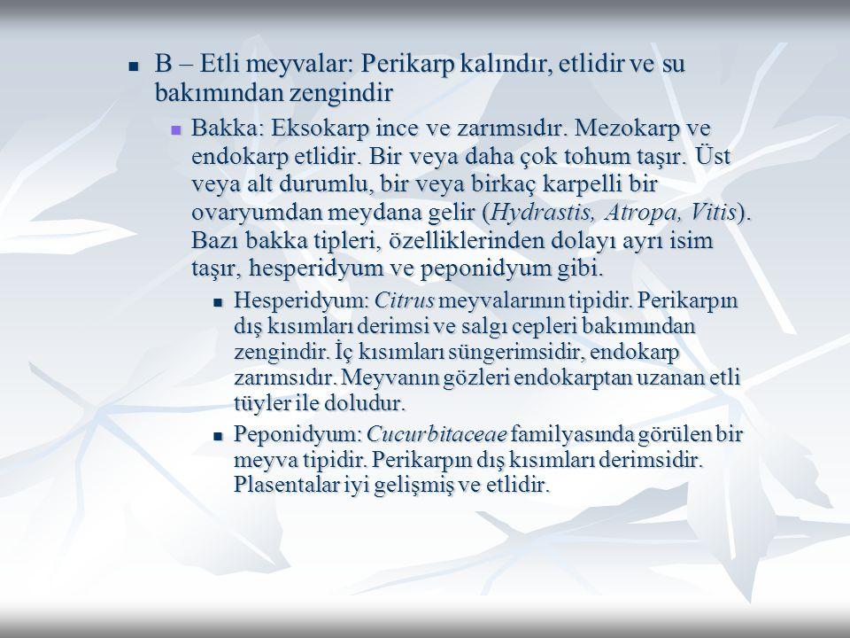 B – Etli meyvalar: Perikarp kalındır, etlidir ve su bakımından zengindir B – Etli meyvalar: Perikarp kalındır, etlidir ve su bakımından zengindir Bakka: Eksokarp ince ve zarımsıdır.