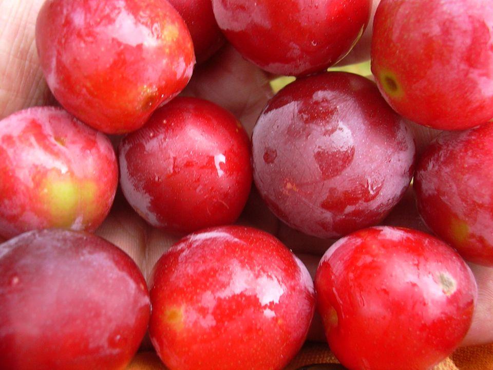 II- Agregat meyvalar Çok pistilli (apokarp) bir çiçekte, pistillerin her biri ayrı bir meyva verir.
