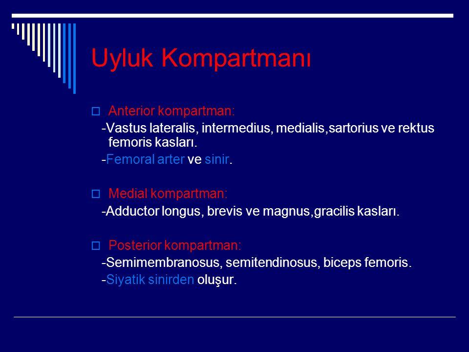 Uyluk Kompartmanı  Anterior kompartman: -Vastus lateralis, intermedius, medialis,sartorius ve rektus femoris kasları.