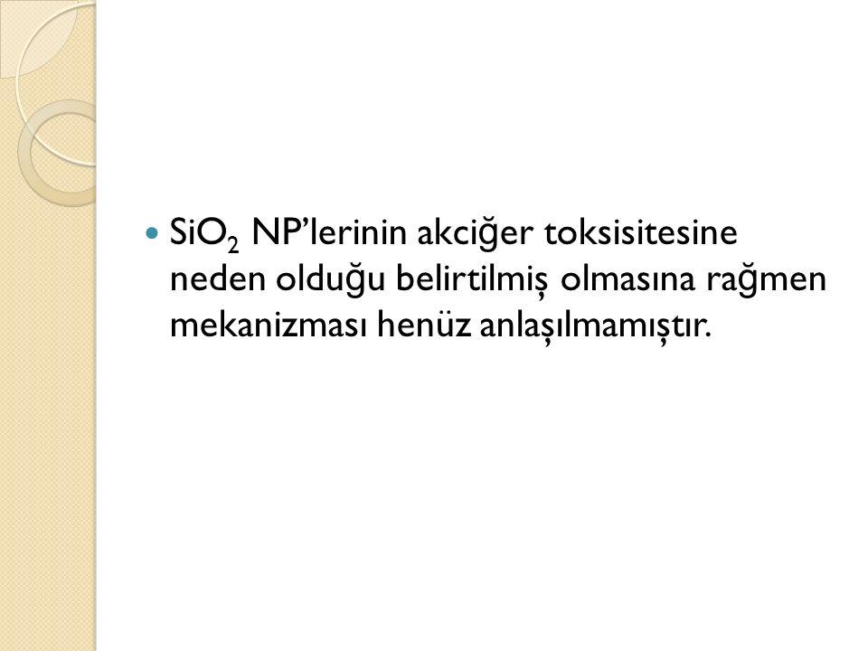 SiO 2 NP'lerinin akci ğ er toksisitesine neden oldu ğ u belirtilmiş olmasına ra ğ men mekanizması henüz anlaşılmamıştır.
