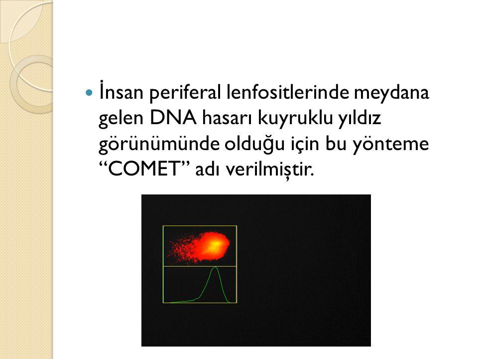 """İ nsan periferal lenfositlerinde meydana gelen DNA hasarı kuyruklu yıldız görünümünde oldu ğ u için bu yönteme """"COMET"""" adı verilmiştir."""