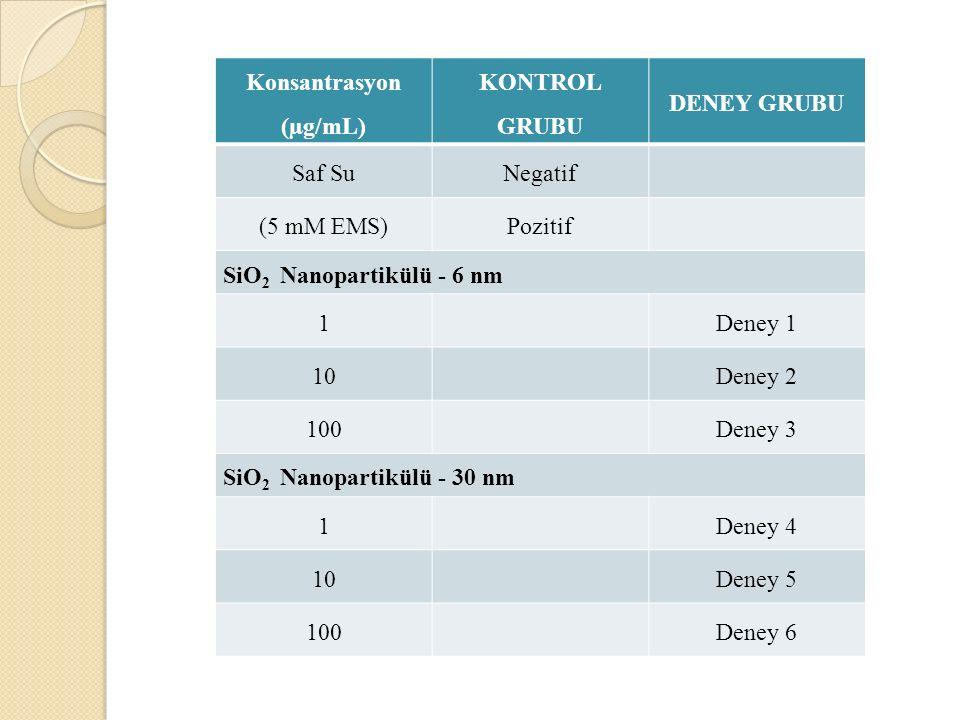 Konsantrasyon (µg/mL) KONTROL GRUBU DENEY GRUBU Saf SuNegatif (5 mM EMS)Pozitif SiO 2 Nanopartikülü - 6 nm 1Deney 1 10Deney 2 100Deney 3 SiO 2 Nanopar