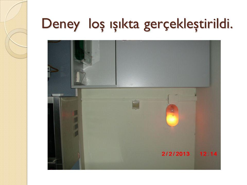 Deney loş ışıkta gerçekleştirildi.
