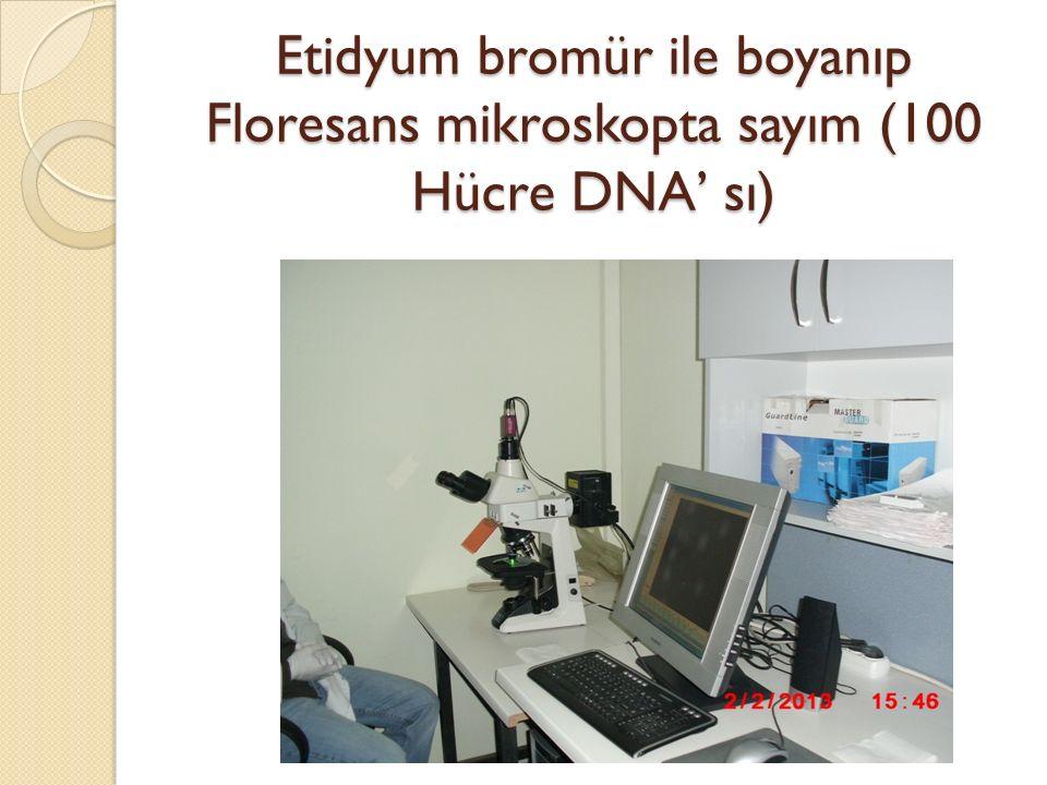 Etidyum bromür ile boyanıp Floresans mikroskopta sayım (100 Hücre DNA' sı)