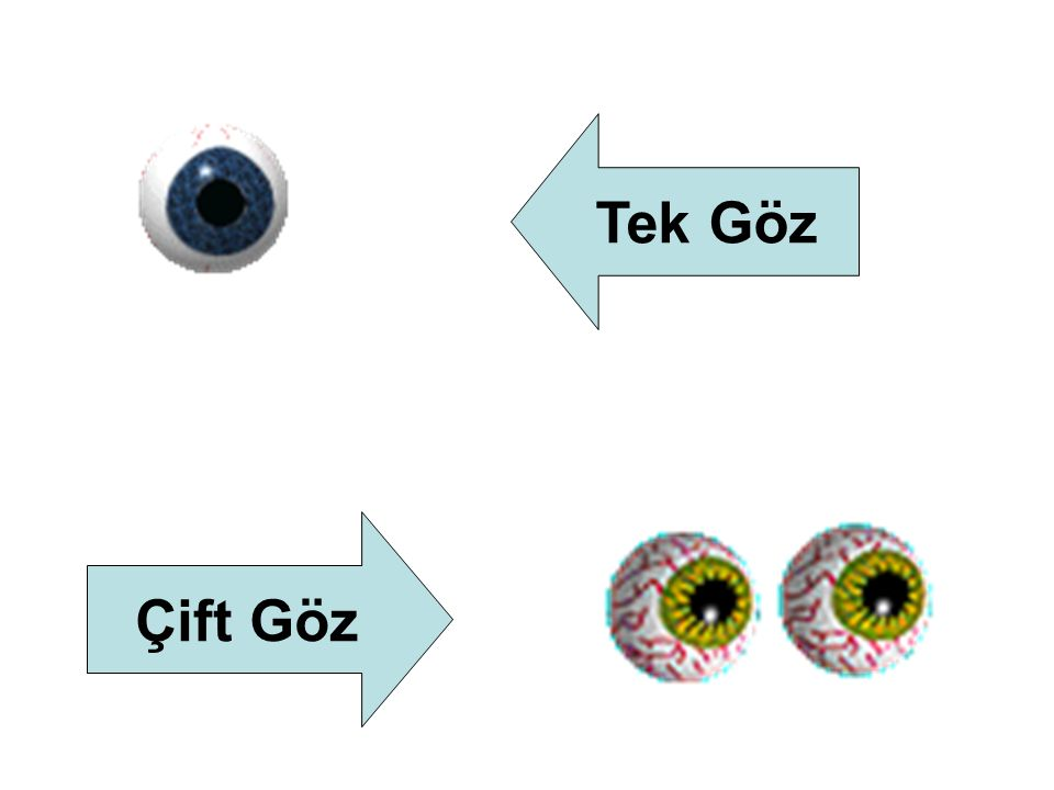 Tek Göz Çift Göz