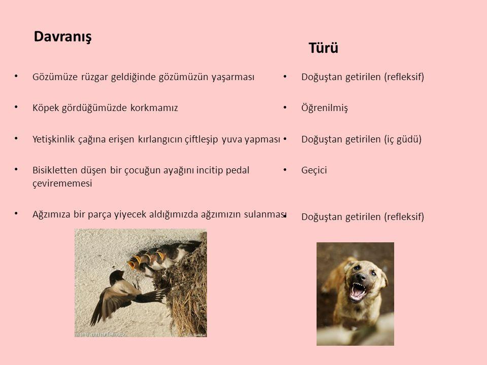 Davranış Gözümüze rüzgar geldiğinde gözümüzün yaşarması Köpek gördüğümüzde korkmamız Yetişkinlik çağına erişen kırlangıcın çiftleşip yuva yapması Bisi