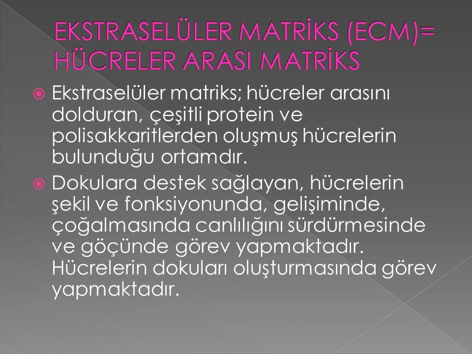  Ekstraselüler matriks; hücreler arasını dolduran, çeşitli protein ve polisakkaritlerden oluşmuş hücrelerin bulunduğu ortamdır.  Dokulara destek sağ