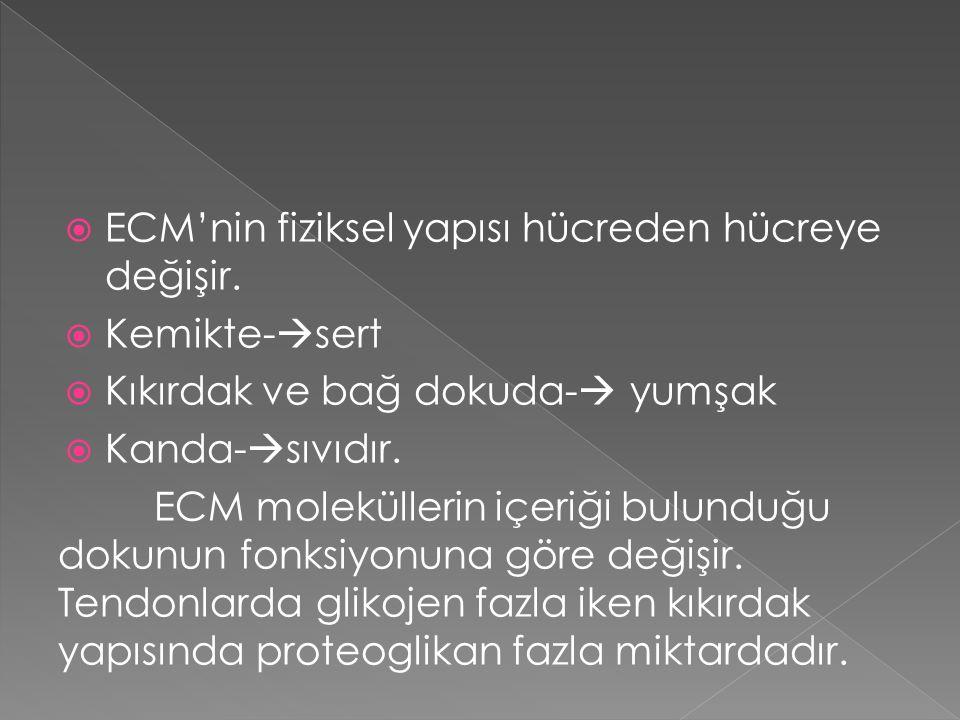  ECM'nin fiziksel yapısı hücreden hücreye değişir.  Kemikte-  sert  Kıkırdak ve bağ dokuda-  yumşak  Kanda-  sıvıdır. ECM moleküllerin içeriği