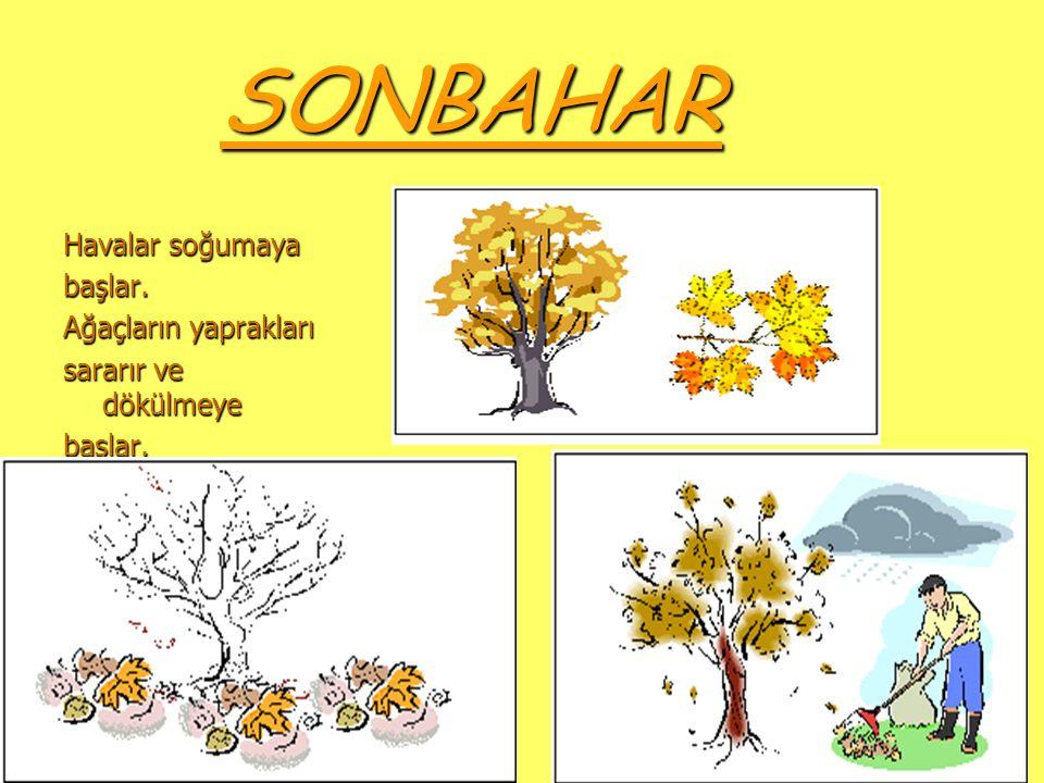 SONBAHAR Havalar soğumaya başlar. Ağaçların yaprakları sararır ve dökülmeye başlar.