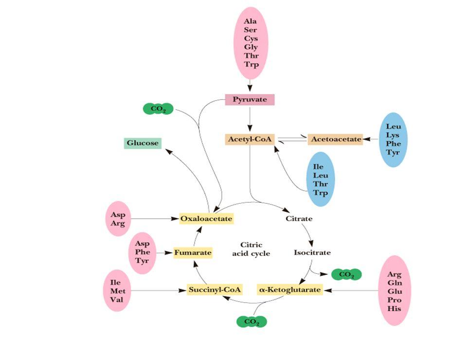 Proteinler biyolojik fonksiyonlarını yerine getirebilmek için metal iyonları, karbonhidratlar, lipidler, koenzimler, porfirin halkaları v.s.