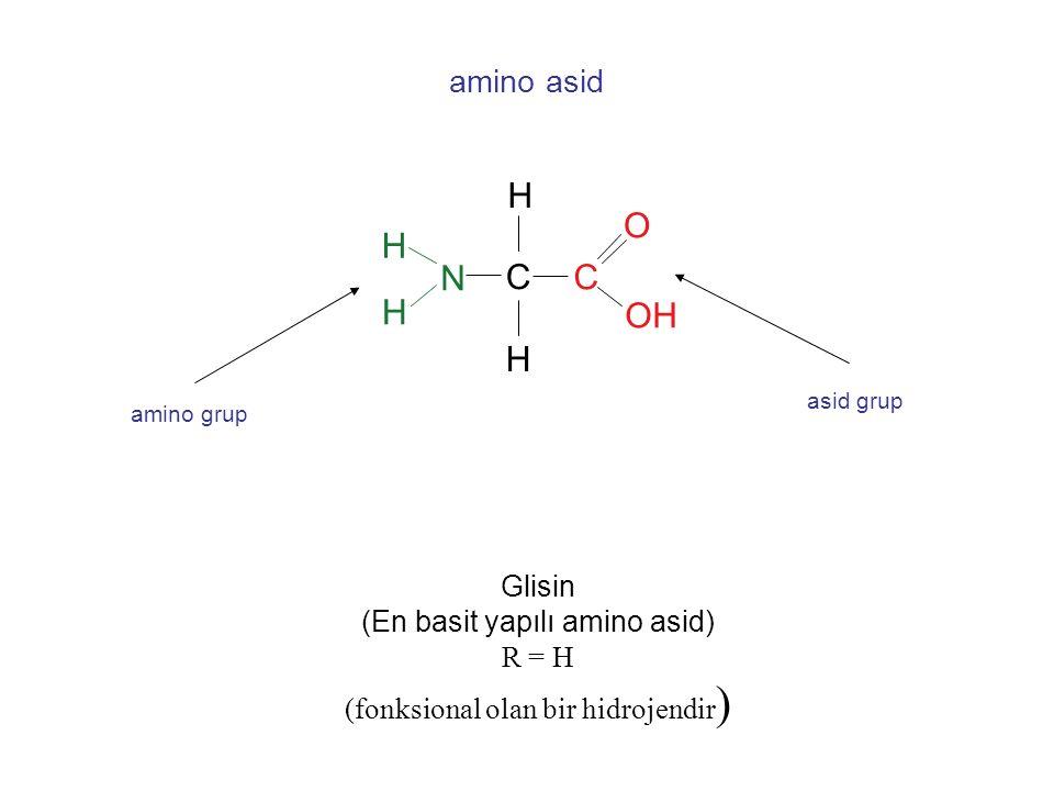 . amino asid N C C H H H H O OH Glisin (En basit yapılı amino asid) R = H (fonksional olan bir hidrojendir ) amino grup asid grup