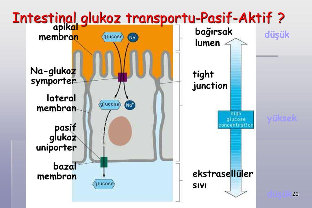29 apikal membran Na-glukoz symporter lateral membran pasif glukoz uniporter bazal membran bağırsak lumen tight junction ekstrasellüler sıvı düşük yüksek Intestinal glukoz transportu-Pasif-Aktif