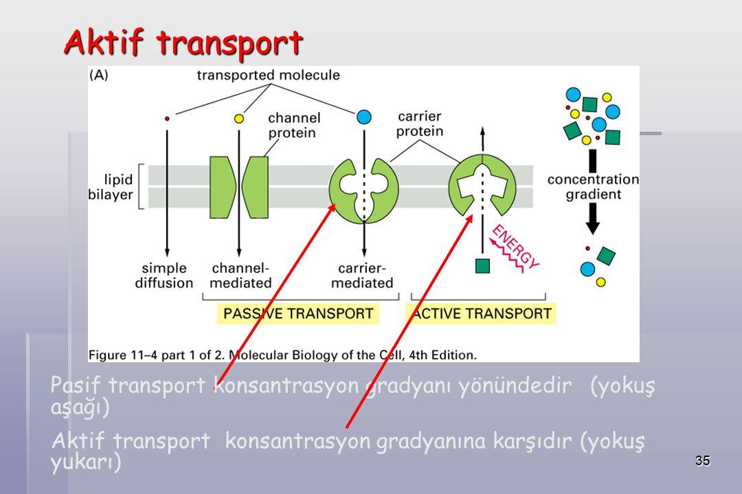35 Aktif transport Pasif transport konsantrasyon gradyanı yönündedir (yokuş aşağı) Aktif transport konsantrasyon gradyanına karşıdır (yokuş yukarı)