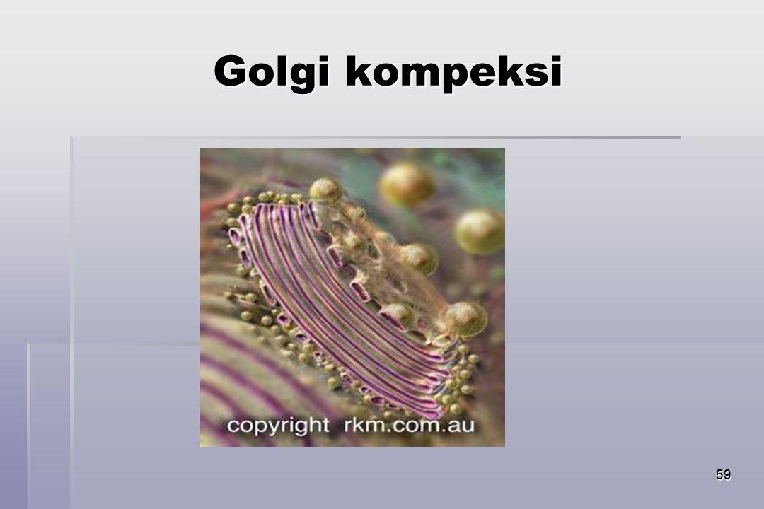 59 Golgi kompeksi