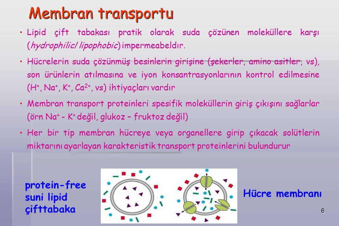 27 Üç tip taşıyıcı Uniport: Tek bir molekülün taşınması Symport: İki farklı molekülü aynı yönde taşır Antiport: İki farklı molekülü farklı yönlerde taşır