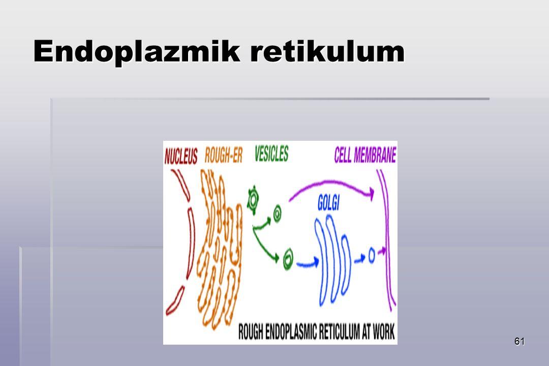 61 Endoplazmik retikulum