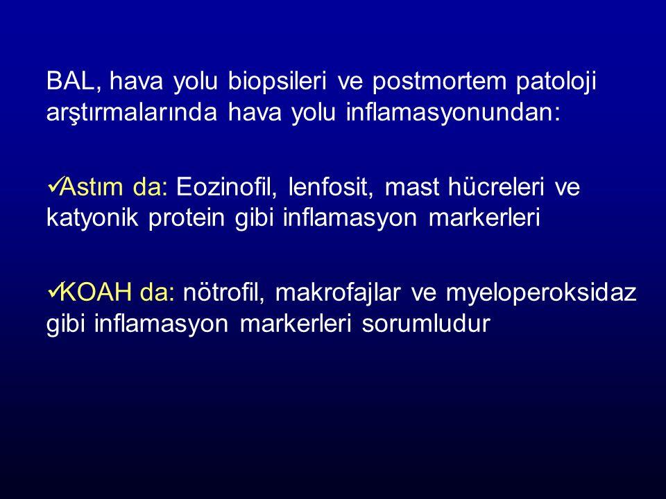 BAL, hava yolu biopsileri ve postmortem patoloji arştırmalarında hava yolu inflamasyonundan: Astım da: Eozinofil, lenfosit, mast hücreleri ve katyonik