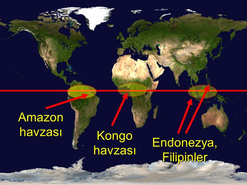 Amazon havzası Kongo havzası Endonezya, Filipinler