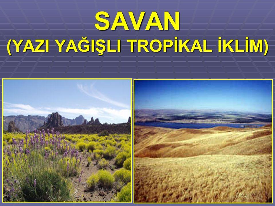 SAVAN (YAZI YAĞIŞLI TROPİKAL İKLİM)