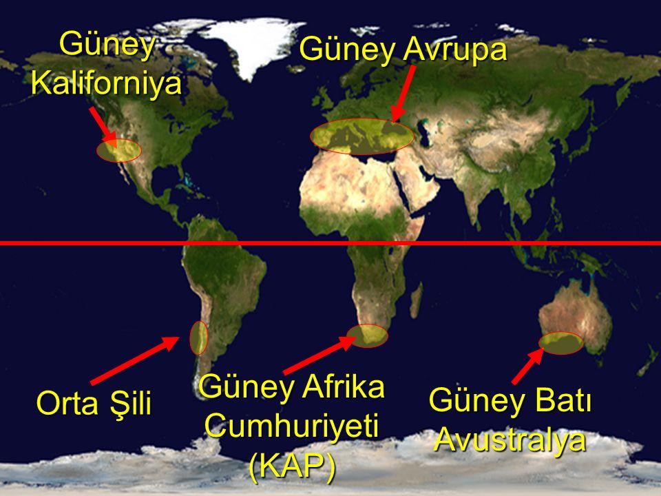 Güney Avrupa Güney Batı Avustralya Güney Kaliforniya Güney Afrika Cumhuriyeti (KAP) Orta Şili