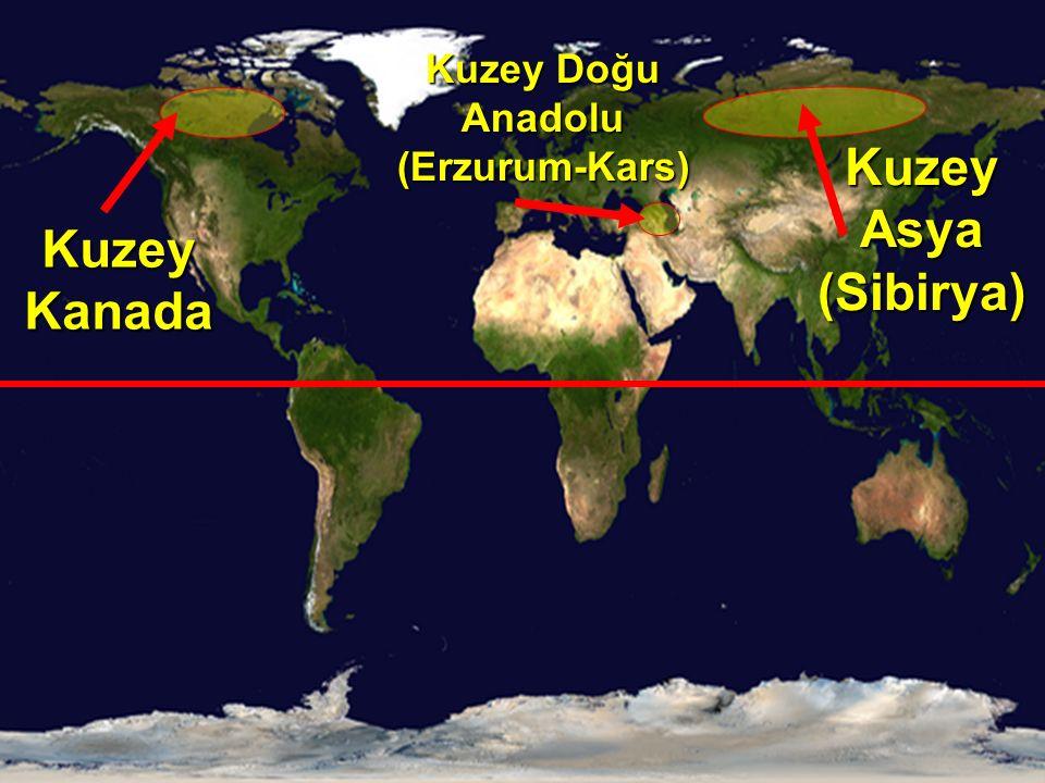 Kuzey Kanada Kuzey Asya (Sibirya) Kuzey Doğu Anadolu (Erzurum-Kars)