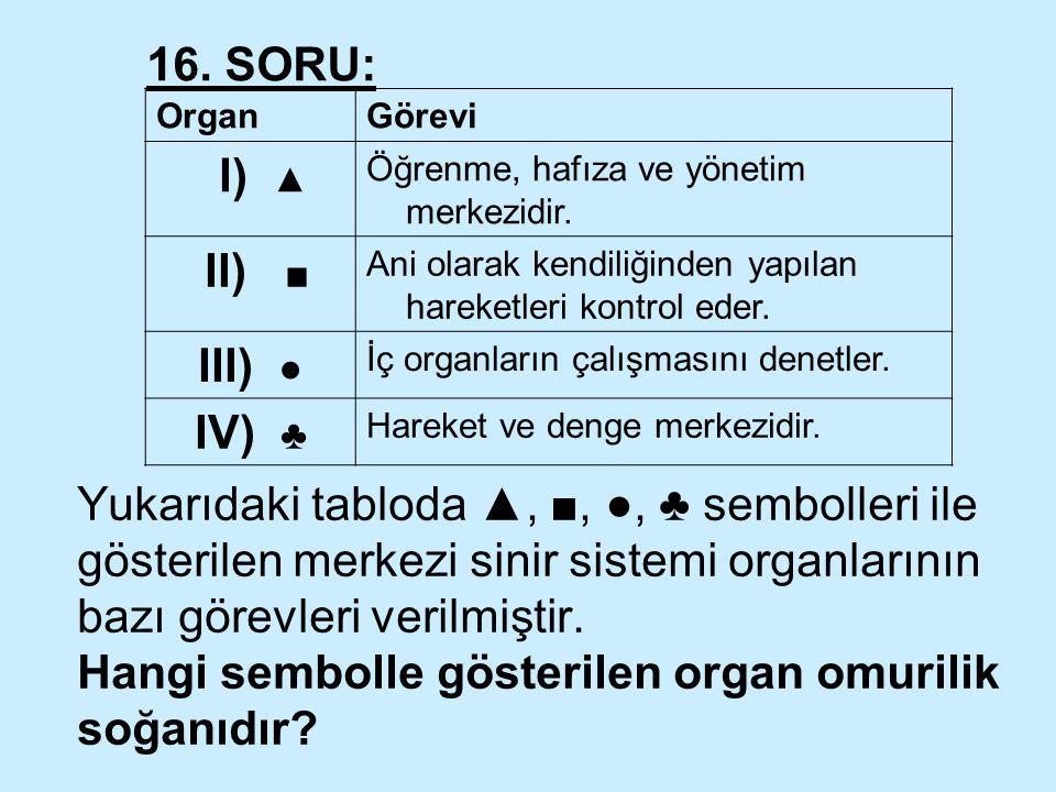 Yukarıdaki tabloda ▲, ■, ●, ♣ sembolleri ile gösterilen merkezi sinir sistemi organlarının bazı görevleri verilmiştir. Hangi sembolle gösterilen organ