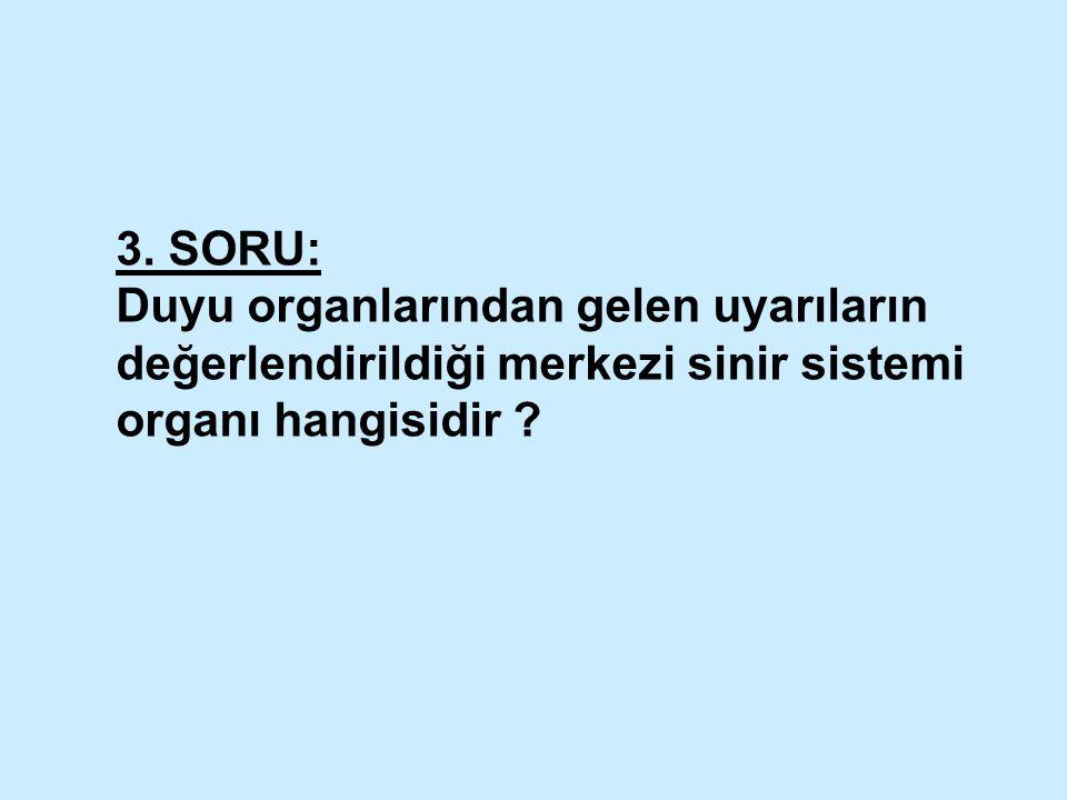 3. SORU: Duyu organlarından gelen uyarıların değerlendirildiği merkezi sinir sistemi organı hangisidir ?