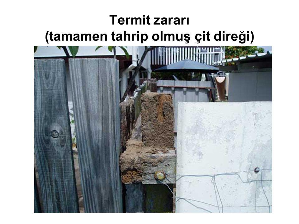 Termit zararı (tamamen tahrip olmuş çit direği)