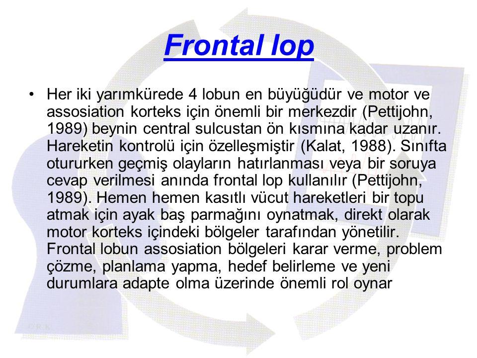 Frontal lop Her iki yarımkürede 4 lobun en büyüğüdür ve motor ve assosiation korteks için önemli bir merkezdir (Pettijohn, 1989) beynin central sulcus