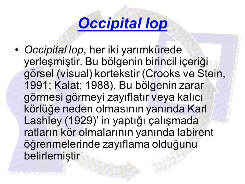 Occipital lop Occipital lop, her iki yarımkürede yerleşmiştir. Bu bölgenin birincil içeriği görsel (visual) kortekstir (Crooks ve Stein, 1991; Kalat;