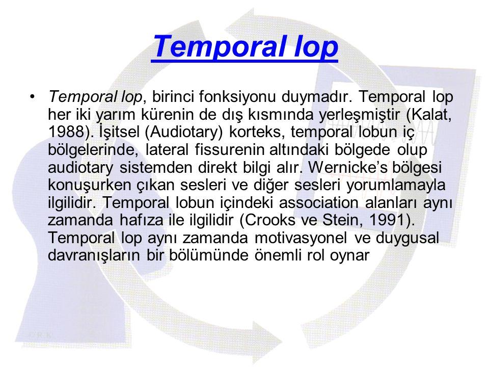 Temporal lop Temporal lop, birinci fonksiyonu duymadır. Temporal lop her iki yarım kürenin de dış kısmında yerleşmiştir (Kalat, 1988). İşitsel (Audiot