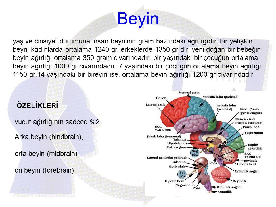 Beyin yaş ve cinsiyet durumuna insan beyninin gram bazındaki ağırlığıdır. bir yetişkin beyni kadınlarda ortalama 1240 gr, erkeklerde 1350 gr dır. yeni